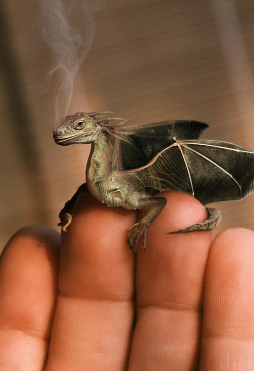 The smallest things eventually become the Biggest #dragon
