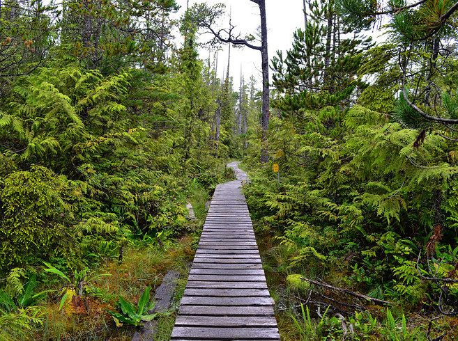 West Coast Trail, BC. 21 Totally Breathtaking Trails To Hike Before You Die