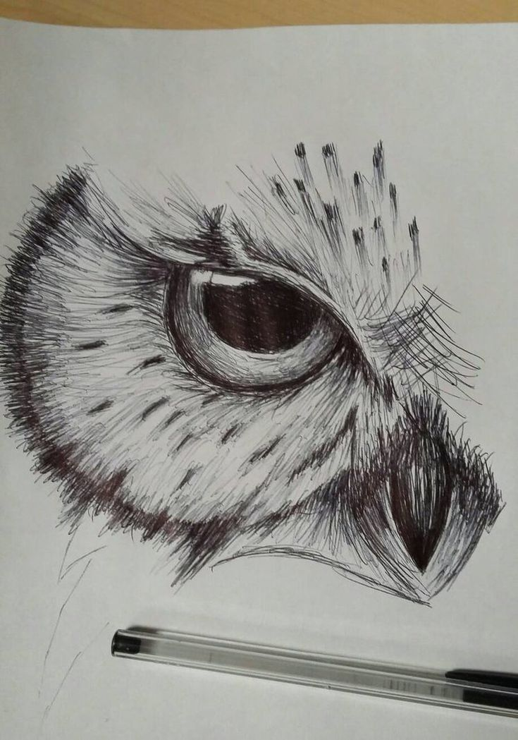 Owl Drawing Ecosia