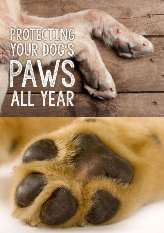 Your dog's paws are just one important way they see the world. Just as humans learn by touching an object, your dog picks up important information about the world from their paws. This is why it's so important to keep your dog's sensitive paws clean, healthy and protected, throughout the whole year!