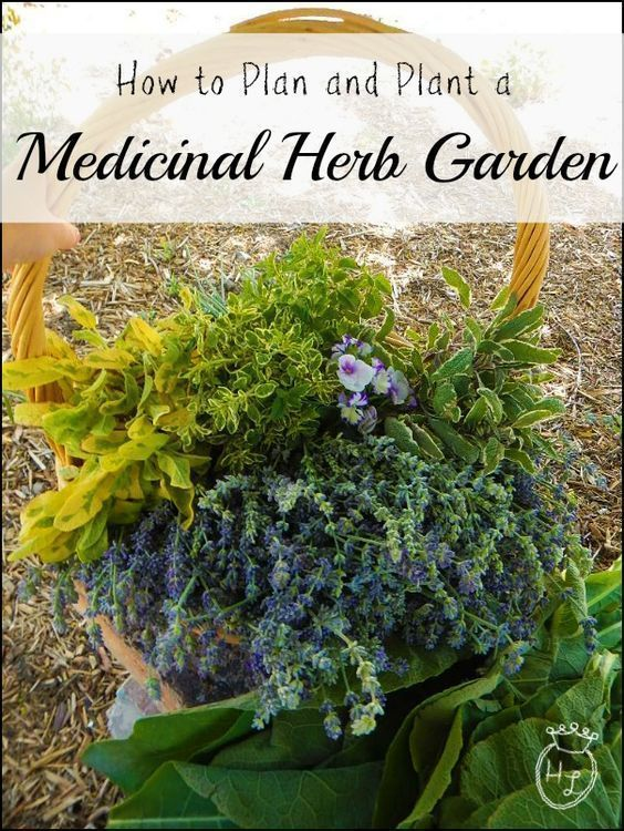 How to Plan and Plant a Medicinal Herb Garden l DIY Health