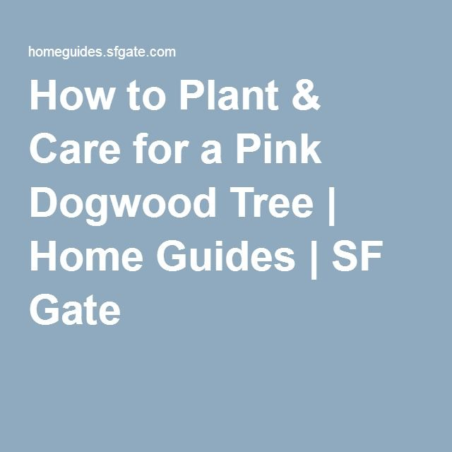 How to Plant & Care for a Pink Dogwood Tree | Home Guides | SF Gate