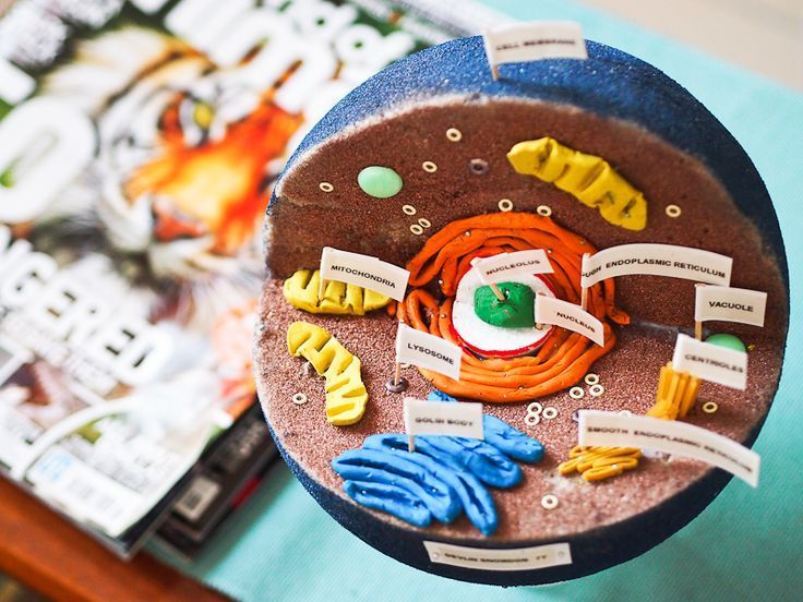 how to make an animal cell model out of cardboard