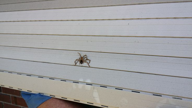 Scary Shutters!  Call The Roller Shutter Repair Company in Adelaide to get your roller shutters cleaned inside and out!