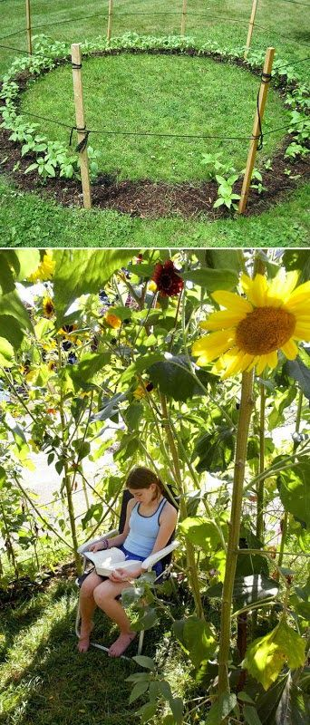 all-garden-world: Grow a sunflower house for the kids to play in