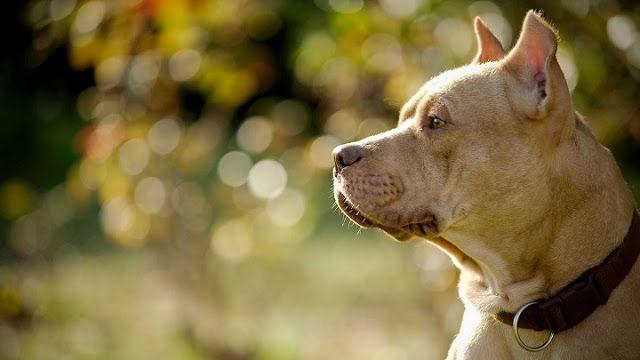 Ecomundo: Tipos de inteligencia canina