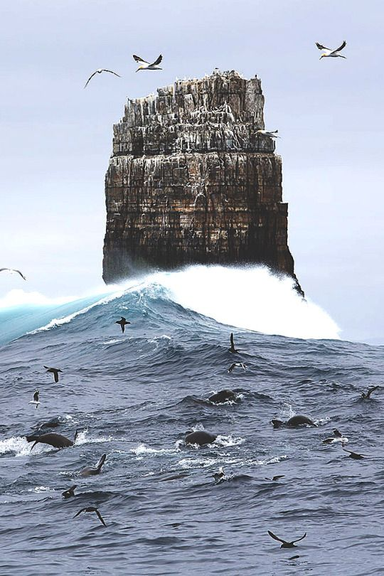 Life by Andy Chisholm A feeding frenzy of seals and albatross at Eddistone Rock off Tasmania's rugged south coast Australia