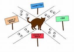 La vita del gatto è centrata sul territorio. Per comprendere il territorio del gatto occorre vedere le cose dal punto di vista del gatto e immaginare che lo spazio vitale corrisponde a un piccolo v…