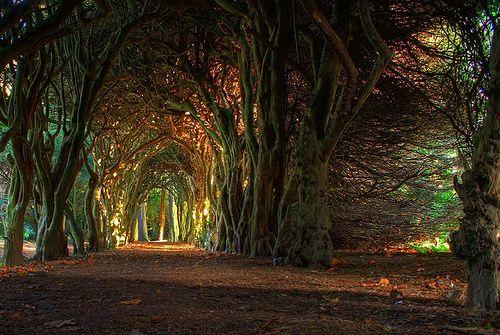Ancient Forest, Mueth, Ireland