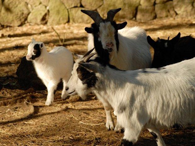 animal — Marcelle Natureza — Parque Zoológico cerca de Lugo, rutas, excursiones, campamentos, picnic