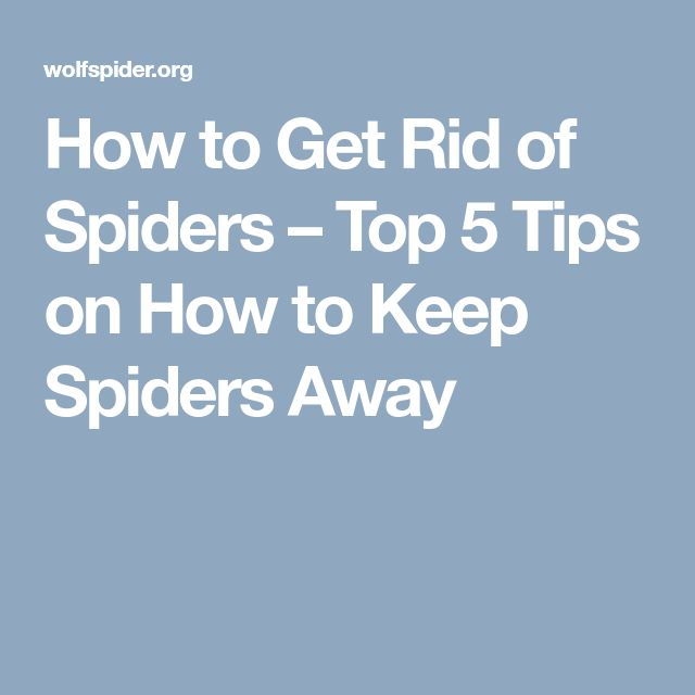 How to Get Rid of Spiders – Top 5 Tips on How to Keep Spiders Away
