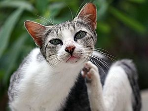 24 Best Community Cats Images On Pinterest Feral Cats