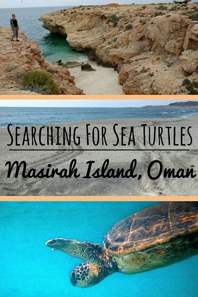We are on an active turtle nesting beach. We are in Oman, a land of forts and frankincense, Bedouins and wadis, desert dunes and rugged coastline. Oman is a country whose white sand beaches serve as the yearly nesting sites for tens of thousands of sea turtles. Swimming with turtles | Oman travel tips | Oman travel things to do | Oman travel adventure | Oman travel bucket list - @greenglobaltrvl