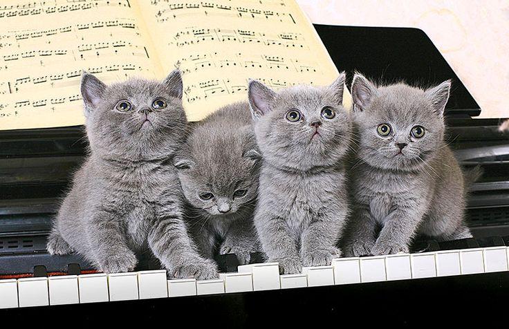 Stampa Digitale Gatti Musica