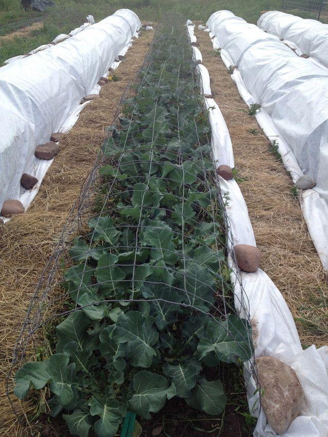 Row Cover Gardening