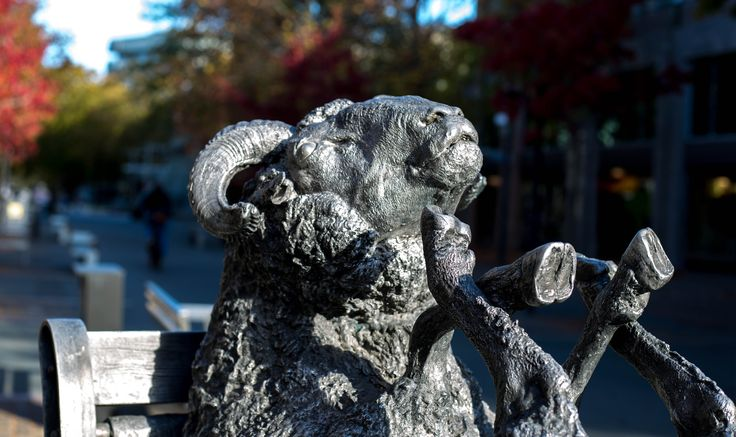 L1M1AP2  Auto Mode.  Camera handheld. Took this photo at 3pm with strong direct sun light on the sheep sculpture's face.I noticed how the direct sunlight cast dark shadows on its face.