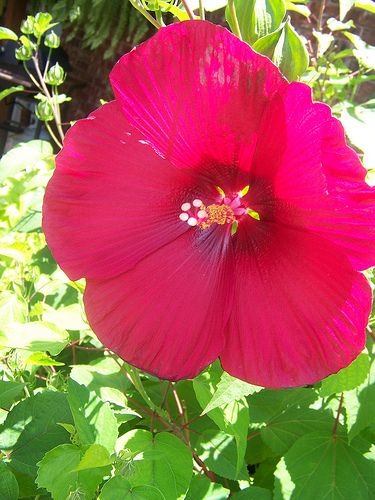 Heat Tolerant Plants This Blogger Lives In Texas Too So I