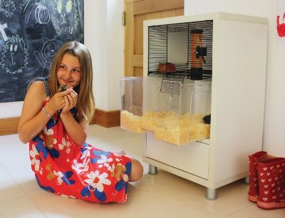 the qute hamster house. i just think this is so cool.