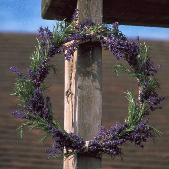 Something to keep mosquitos away when sitting in the garden in the evening...they hate lavender!