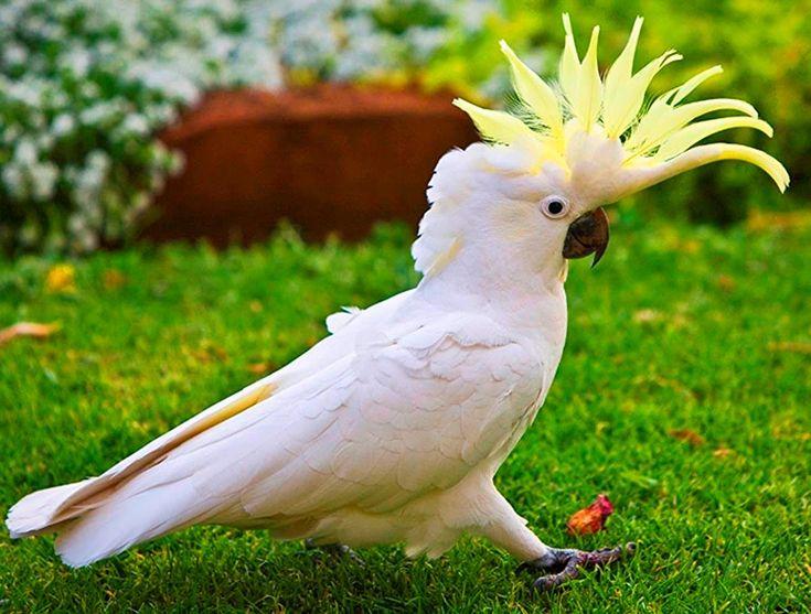 Экзотические птицы  с названиями