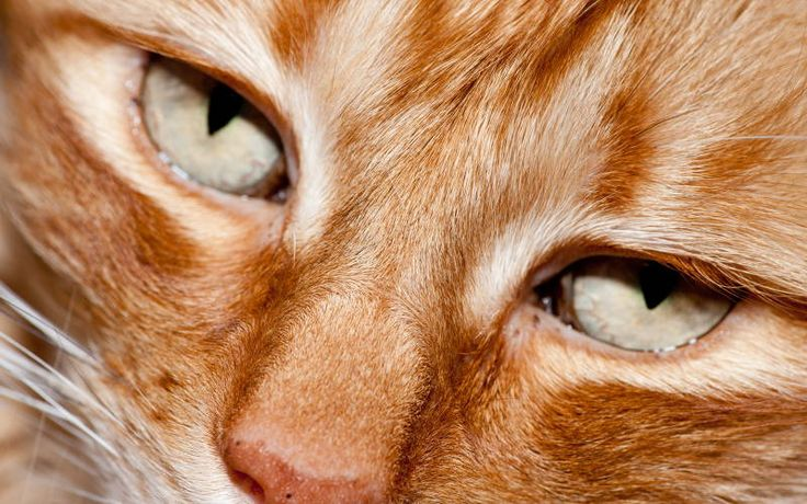Czy kota można karmić surowym mięsem?