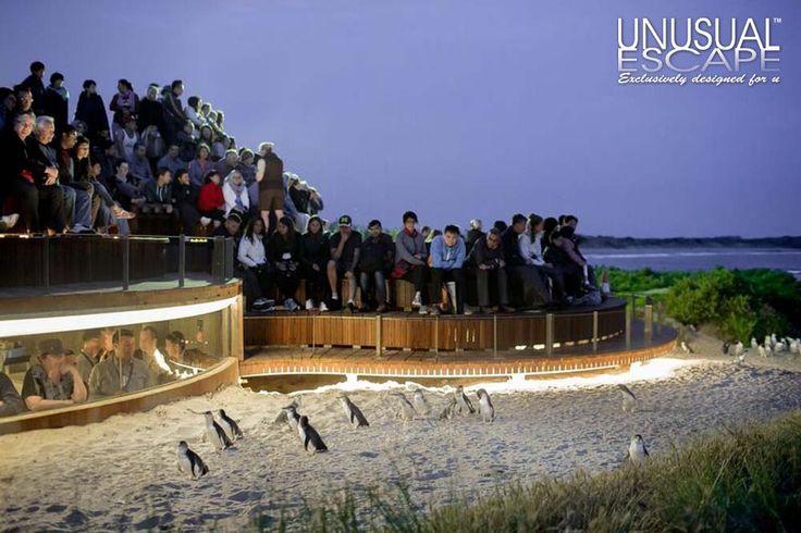 Penguine Parade Penguine Plus