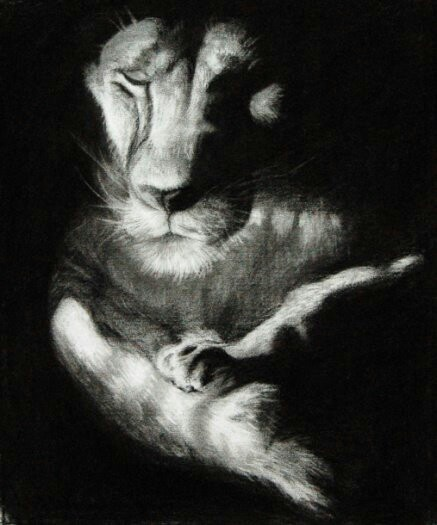 charcoal drawings. tiger