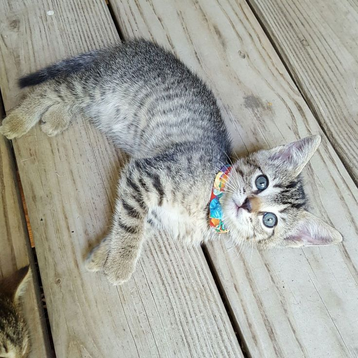 179 Best Just Viral Kittens Images On Pinterest