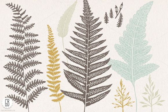 Check out Fern, botanical vector graphics by GrafikBoutique on Creative Market