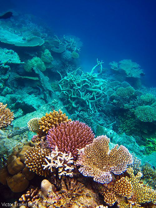 Coral reef of the Maldives.  https://victortravelblog.com/2015/03/25/best-coral-reef-locations-maldives-or-great-barrier-reef/