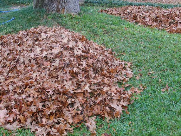 Fall is an ideal time for fertilizing your lawn. Remove fallen leaves by raking and composting them or mulch them with a mulching lawn mower.