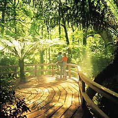 The Great Otway National Park is inspiring with its amazing rainforests, cliffs, four wheel drive tracks and the Otway Tree Top Walk.