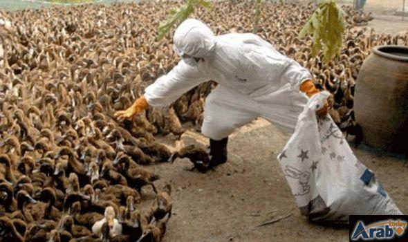 H5N1 bird flu outbreak reported in Cambodia