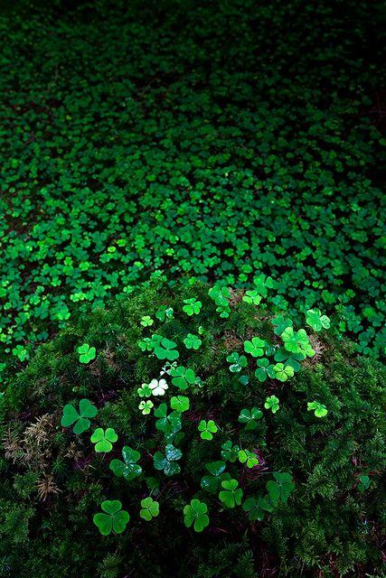 Do you see a four leafed clover?