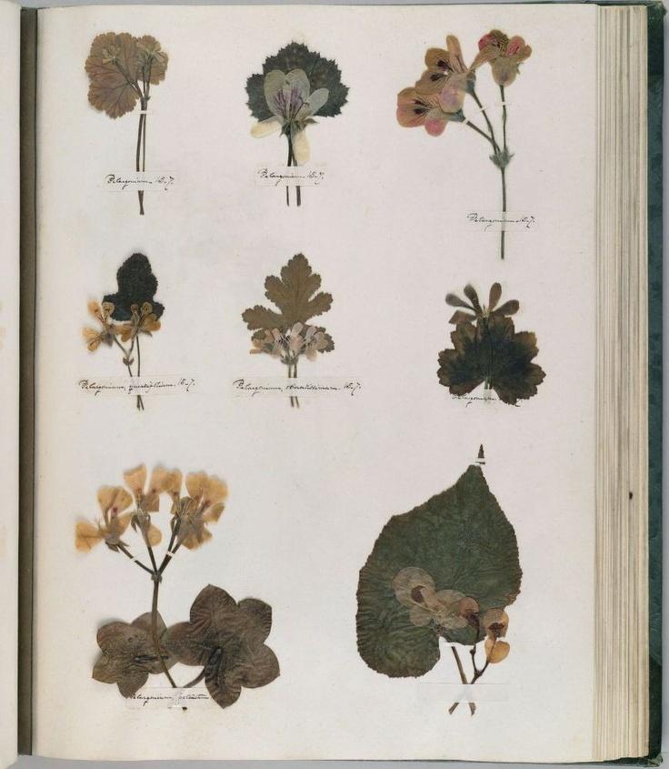 Fancy emily dickonson herbarium