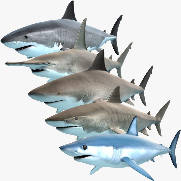 3D Model Shark Predators Great - 3D Model