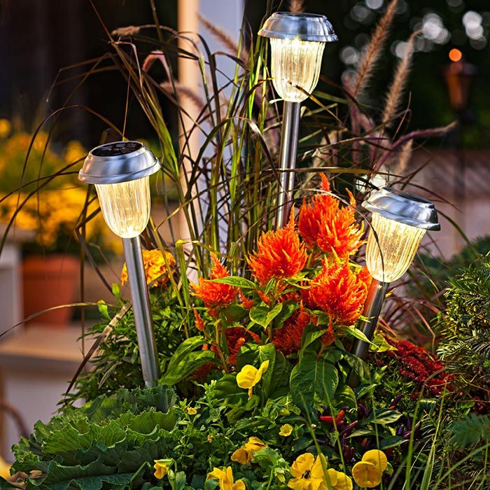 Solar lights in a planter.