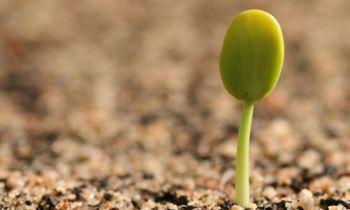 La nueva Ley de Semilla y la matríz productiva agrícola - EcoPortal.net