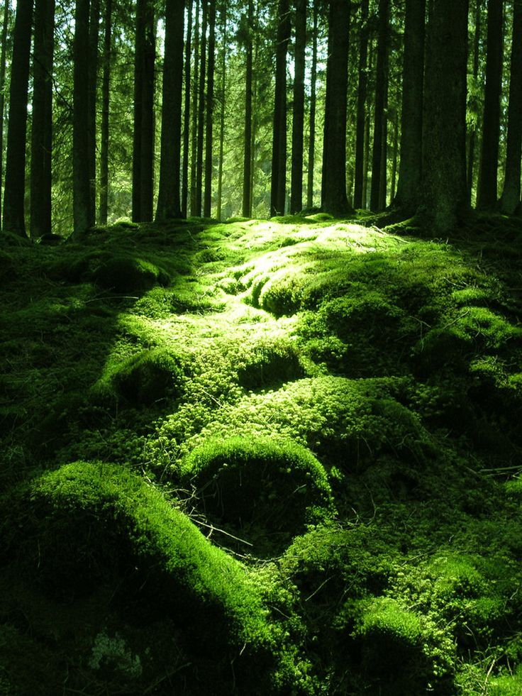 The nature of the forest.