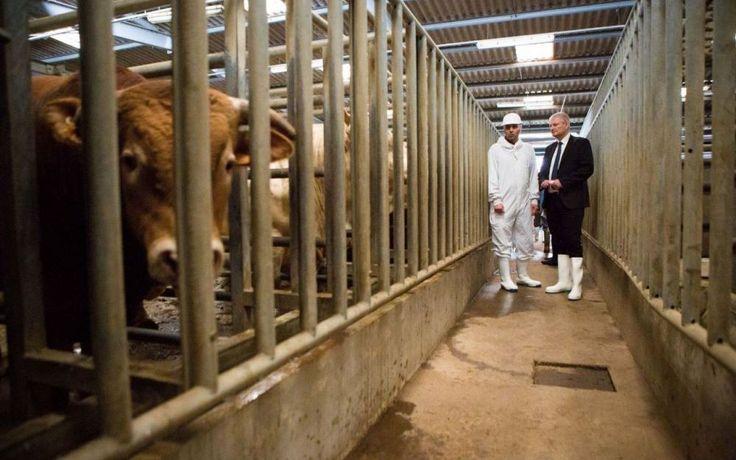 La commission d'enquête de l'Assemblée nationale sur les abattoirs a effectué à l'aube ce mardi un quatrième déplacement inopiné, dans un ab...