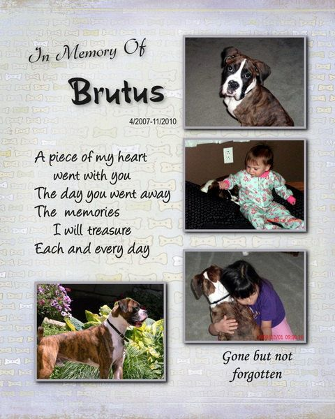 Pet Memorial Collage Personalized For Your Dog By Thelaughingpet