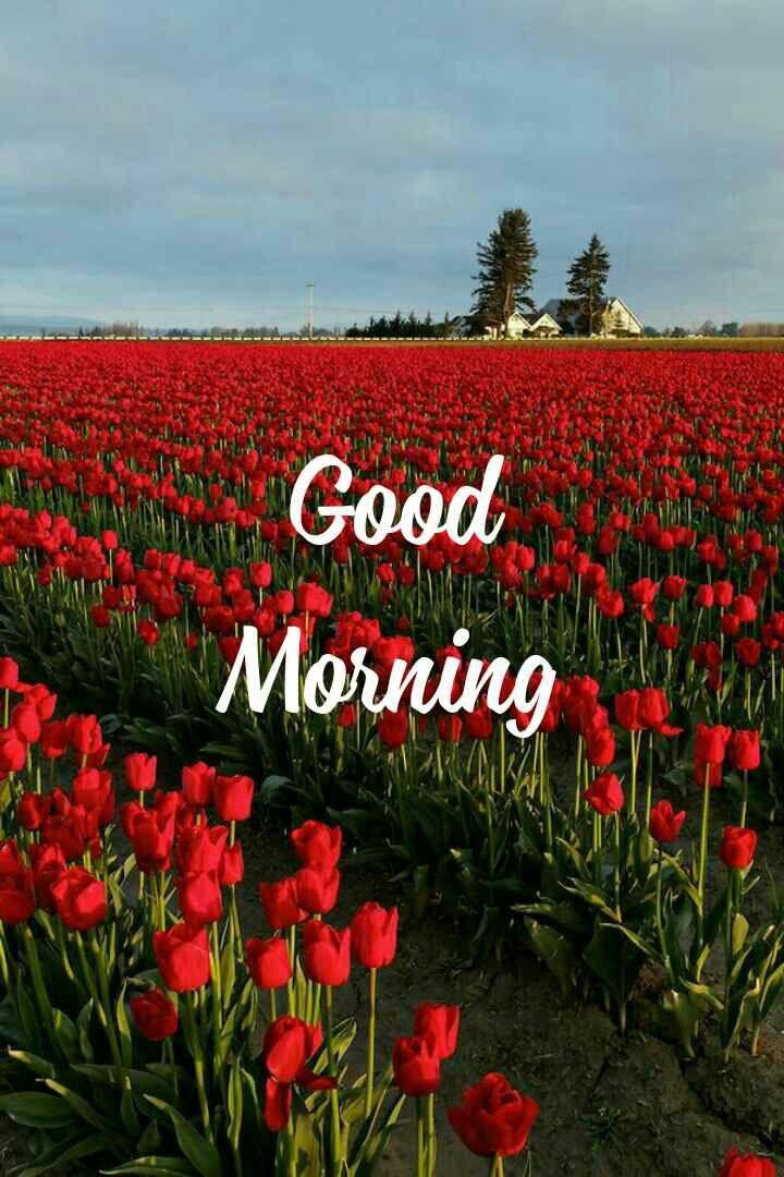 Good Morning Beautiful In 2020 Good Morning Sweetheart Quotes Good Morning Nature Good Morning Quotes