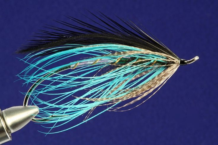 Black and blue feather wing spey pages fly tying for Fly fishing feathers