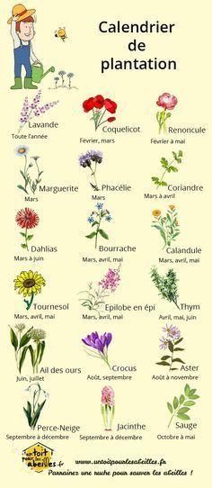Calendrier de plantation des fleurs pour les abeilles Plus