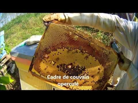 comment faire un essaim d 39 abeilles artificiel facilement. Black Bedroom Furniture Sets. Home Design Ideas