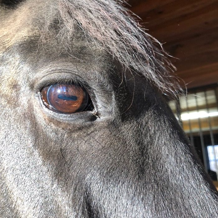 In Light And Dark Your Horse S Vision The Cooperative Horse In