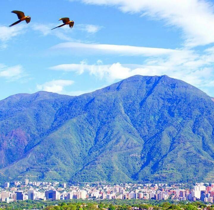 Guacamayas sobrevolando a Caracas