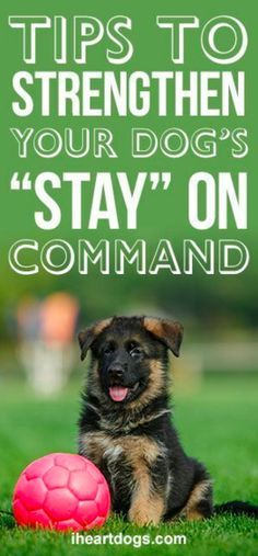 "Tips To Strengthen Your Dog's ""Stay"" On Command http://www.poochportal.com/category/dog-training/"