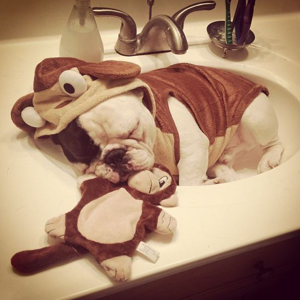 HE'S REALLY INTO SLEEPING IN COSTUME, OKAY?! | 28 Important Facts About Manny The Sink Sleeping French Bulldog