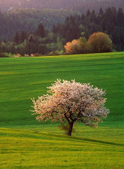 Meadow in Slovakia